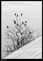 Crows by Orzz