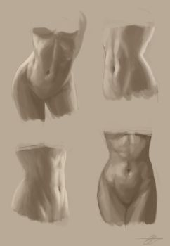 Studies - Female Abs by SnakeToast