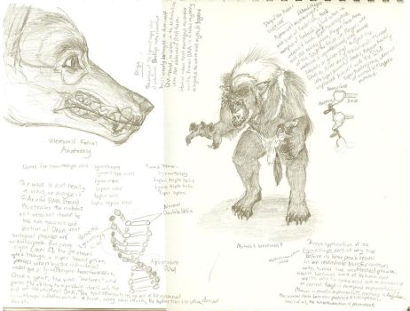 Werewolf Biology Speculation by FablePaint