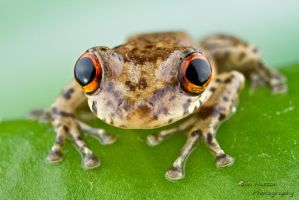 Tree frog by ColinHuttonPhoto