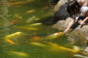 Girl Feeding Koi by AndySerrano