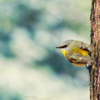 .:: Little Robin ::. by Whimsical-Dreams