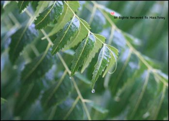 Droplet Leave by TOLAY