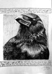 Juana the Carrion Crow by nunt