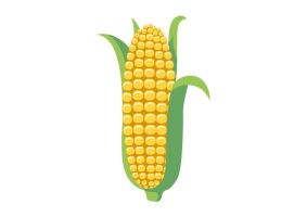 Corn With Leaves Free Vector by superawesomevectors