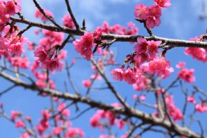 Tree Blossom by Muse-4-Life