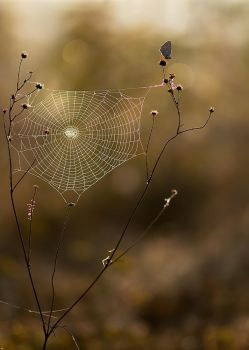 spiderweb by dralik