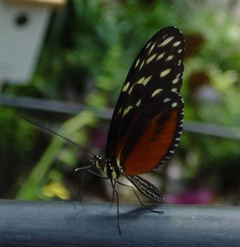 Butterfly House 13 by themuseslibrary
