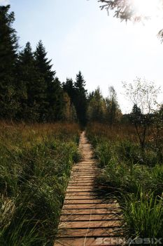 High Fens: Path into the forest by SchnabsiX