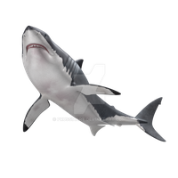 Shark on a transparent background. by PRUSSIAART