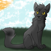 Graypaw by Harryn53012