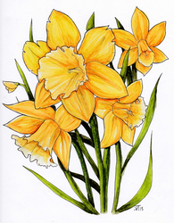 daffodils for a friend ! by Sno--Leopard