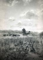Horses in meadow by Andrei-Pervukhin