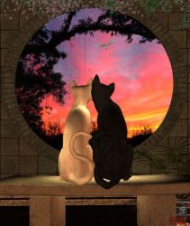 Cats in love by insanecatlady