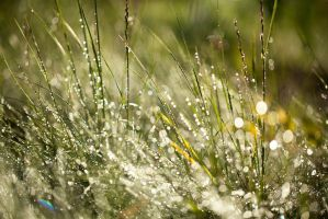sun, grass and dew by AndreyCherkasov