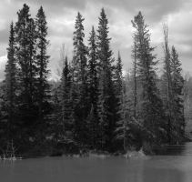 Black Spruce by MoonlitRain011