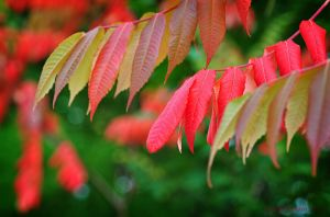 Autumncolours by SmartyPhoto