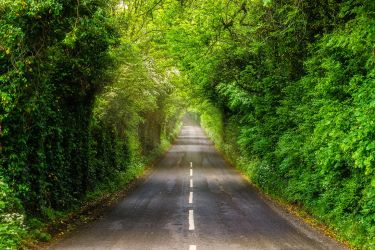 Green Tunnel by TarJakArt