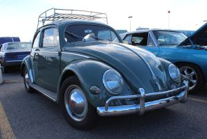Oval Window Bug by KyleAndTheClassics