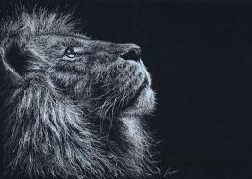 Lion by pamslaats