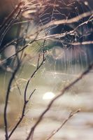 web by Adrienneknott
