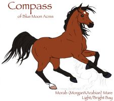 Compass - Morab Mare by lantairvlea