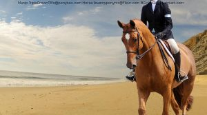 Walk on the beach(Horse Picture) by MollyMay335