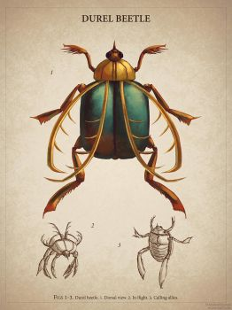 Bestiary Project - Durel Beetle by StarsAndOceans