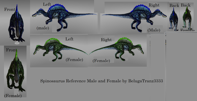 Spinosaurus reference male and female 3D by BelugaTranz3333