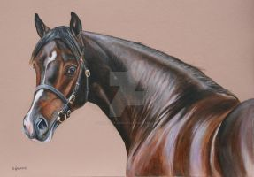 The colt by Stephanie-Greaves