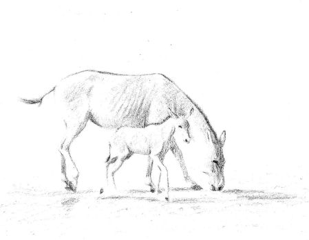 Onager mare and foal - black and white by MustangMadness8