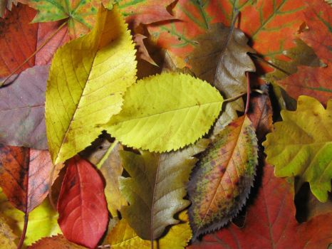Colorful leaves 2 by BlackCatArtDA