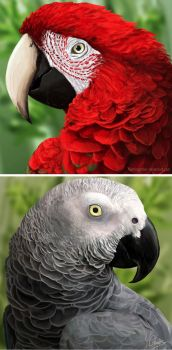 Macaw and African Grey by FleetingEmber
