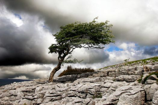 Wind and Wuthering at Twistleton Scar. by GaryTaffinder