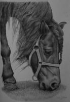 Commission shetland pony by Odette1994