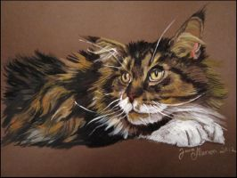 My cat by 88Laura88