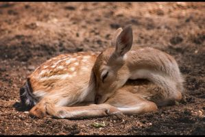 Sleeping Fawn by Ylliny