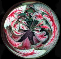 Caladium Bowl by Tailgun2009