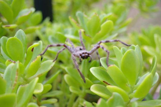 spider that sat on a plant7 by vjs