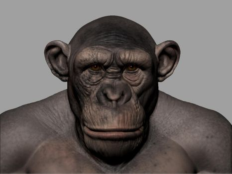 Chimp#1 by mmodarres