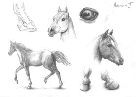 Horses by Amee-J