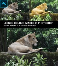 Lion Nautural Colour by 512pixel