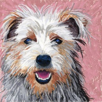 Yorkshire terrier dog portrait by classina