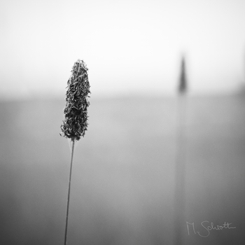 Minimal Nature. by marc-bruno