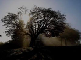 contrast in the morning by PHOTOAPHASIA