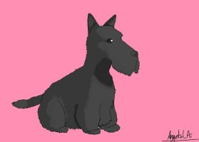 Scotish Terrier by Muuluzi