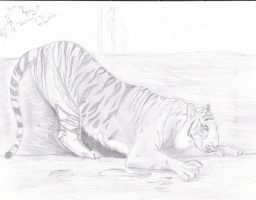 Tiger-Stretch sketch 4 hayley by Kiba-Aido