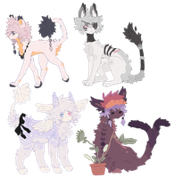 adopts  / /open ! by wqlf