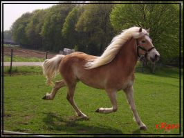 Running Horse by xRooz