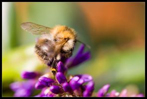 Busy Bee by Wivelrod
